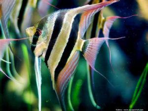 Avril, mois du poisson