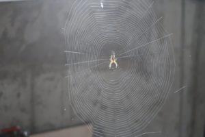 Le retour des araignées